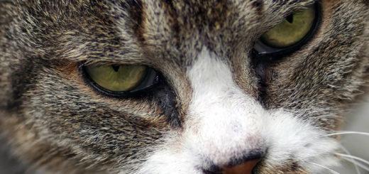 野生の眼 猫